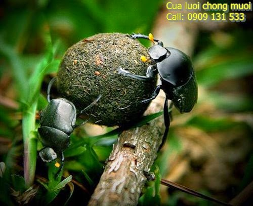 kha-nang-phi-thuong-cua-bo-hung